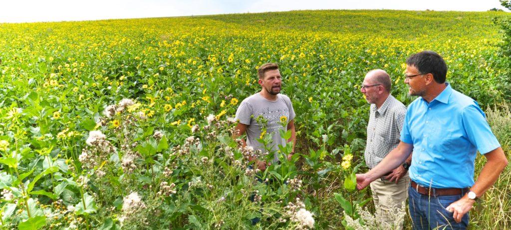 Landrat Heinz-Peter Thiel (Vulkaneifel) und Dr. Andreas Schüller (Natur- und Geopark Vulkaneifel) lassen sich von Renè Blum (Bergfelderhof Niederbettingen) den Anbau der Silphie erklären.